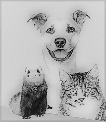 Inscripció d'animals de companyia i animals salvatges en captivitat en el Registre censal